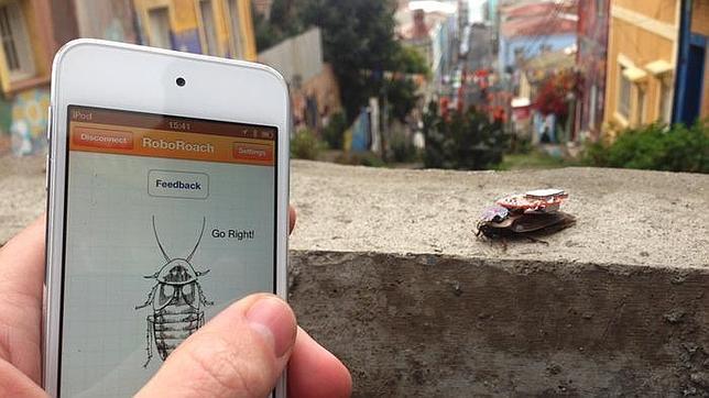 Cucarachas vivas teledirigidas con iPhone