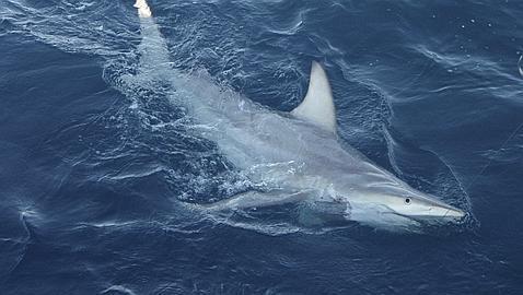 Muere en Hawai una mujer después de que un tiburón le arrancara el brazo