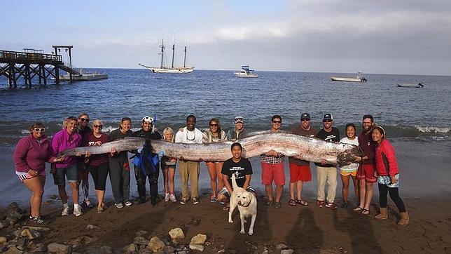 Un «monstruo marino» de más de 5 metros aparece muerto en aguas de California
