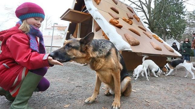 Carne para perros pudo acabar en alimento para humanos en Irlanda del Norte
