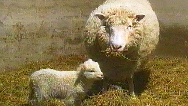 La oveja Dolly, con su primer cordero: Bonnie. Nació en 1998