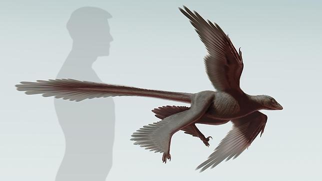 Descubren El Dinosaurio Volador Con La Cola Mas Larga Se han encontrado fósiles en. dinosaurio volador con la cola mas larga