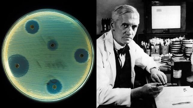 Fleming descubrió por accidente que las bacterias no crecían alrededor de un tipo de moho