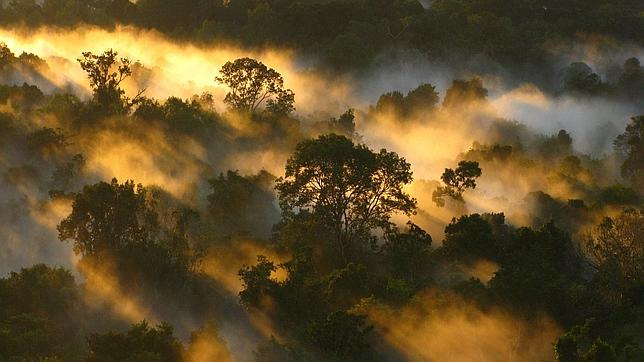El Amazonas, al amanecer