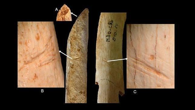 Los neandertales realizaron cortes con herramientas de sílex en este radio