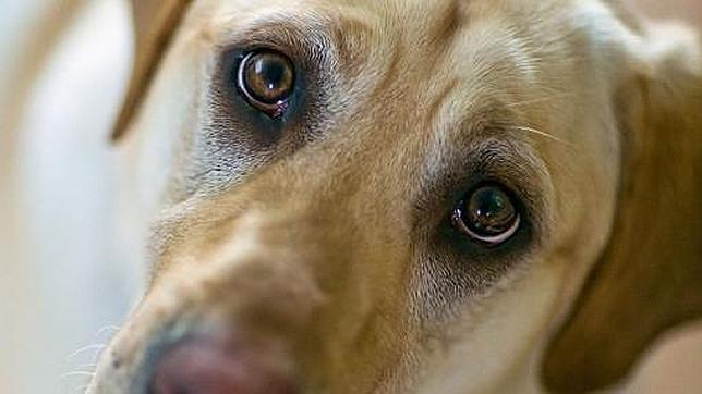 Cómo los perros nos robaron el corazón: sus comportamientos más «humanos»