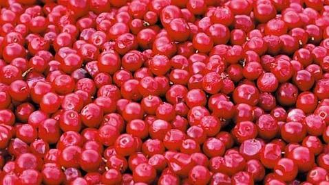 Arándanos, antioxidantes y antibacterianos y ahora antitumorales