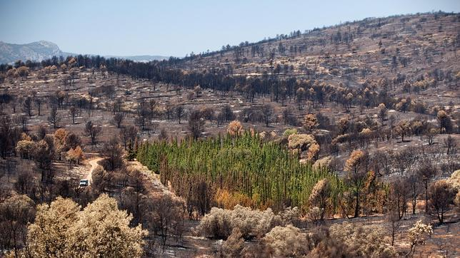 Imagen más difundida del Gran Incendio Forestal de Andilla de 2012