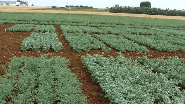 El volumen de legumbres consumidas en 2014 representó 140.888 toneladas en España