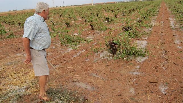 El pedrisco eleva a 300.000 las hectáreas de cultivo siniestradas