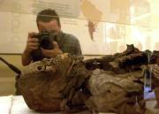 Una de las dos momias guanches, los aborígenes que habitaron por primera vez las Islas Canarias,se exhibe en una urna del Museo de la Ciencia y el Hombre de Santa Cruz de Tenerife, después de que ambos cuerpos hayan sido devueltos al Cabildo tinerfeño por
