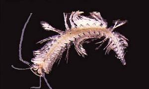 Hallan 850 nuevas especies a un metro bajo tierra en Australia