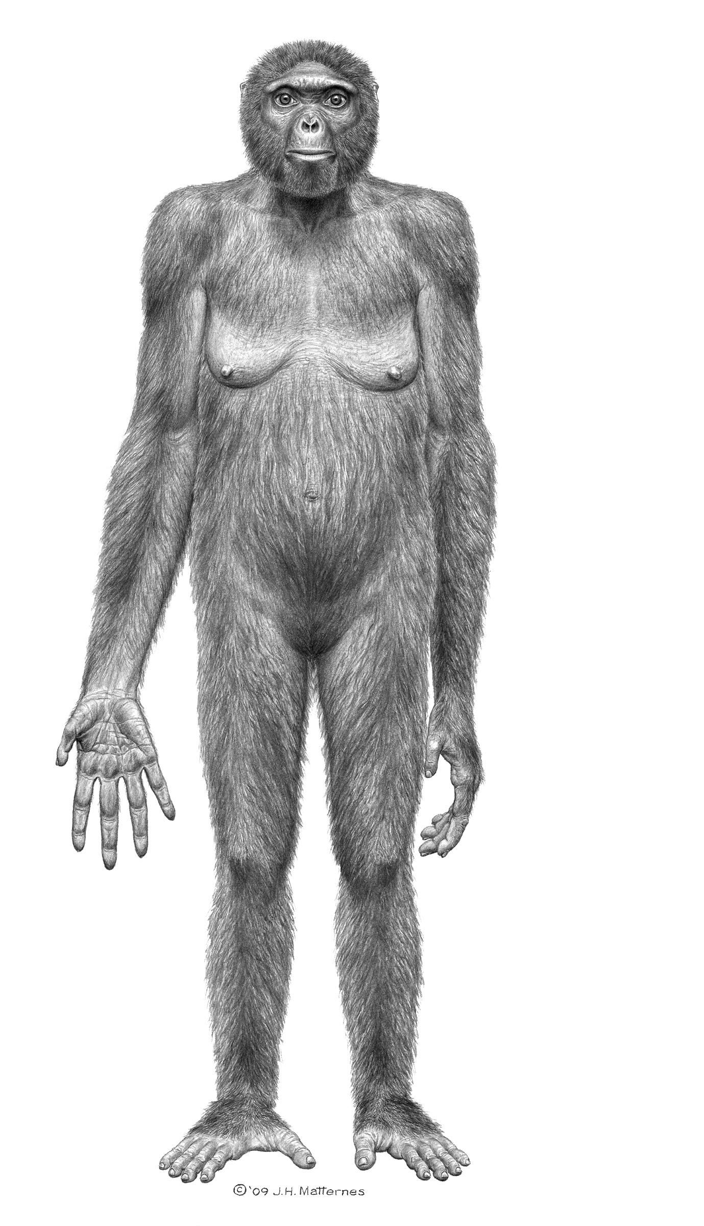 Presentan a Ardi, nuestro antepasado más antiguo