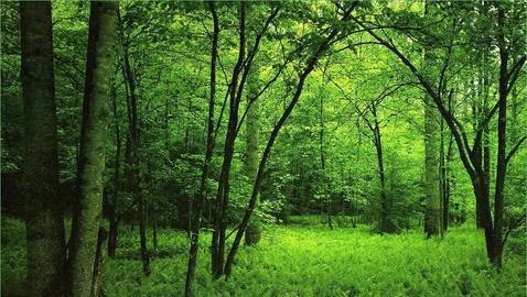 Piden El Centimo Forestal Para Preservar Nuestros Bosques