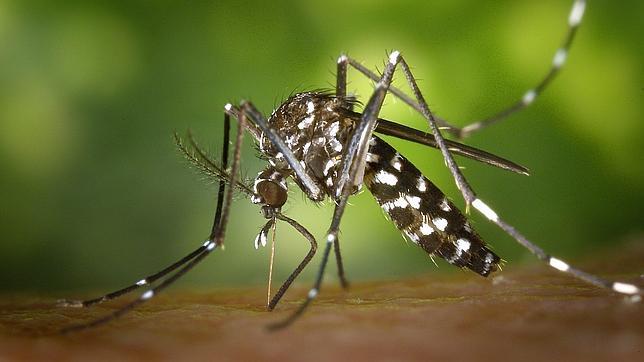 Más mosquitos este verano