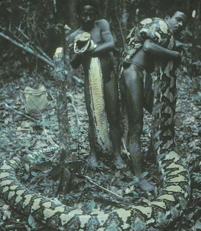 Las serpientes devorahombres de Filipinas