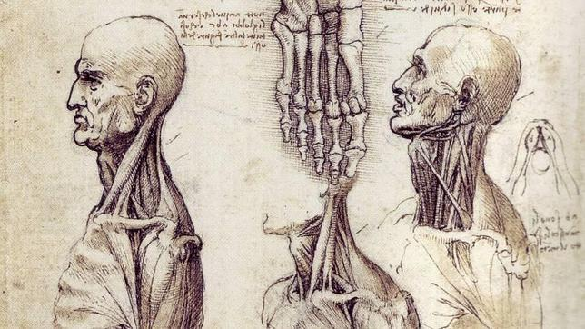 Los dibujos de anatomía de Leonardo salen a la luz en el Palacio de Buckingham