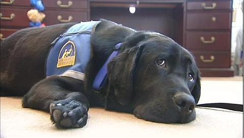 Bronskey, el perro-policía que «testifica» en juicios