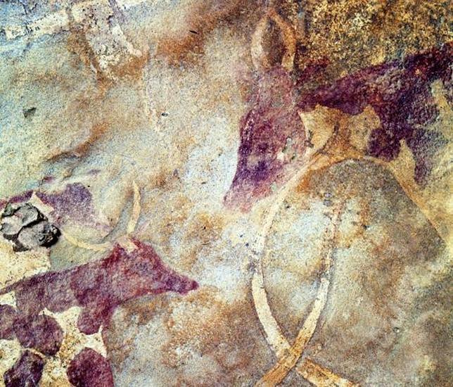 Pastores africanos ya ordeñaban el ganado hace 7.000 años