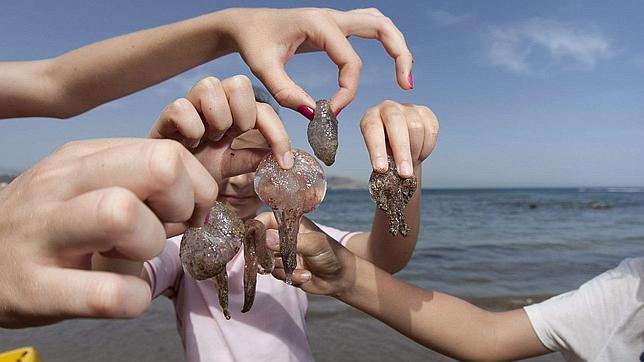 como se curan las picaduras de medusas