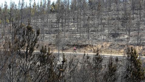 Los incendios han arrasado ya 34.000 hectáreas en lo que va de año