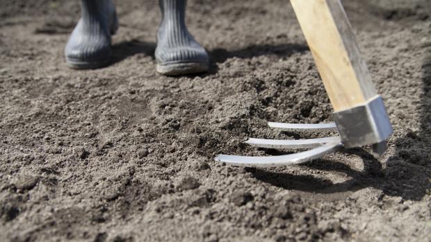 El arado facilitó enotmemente las labores de los primeros agricultores