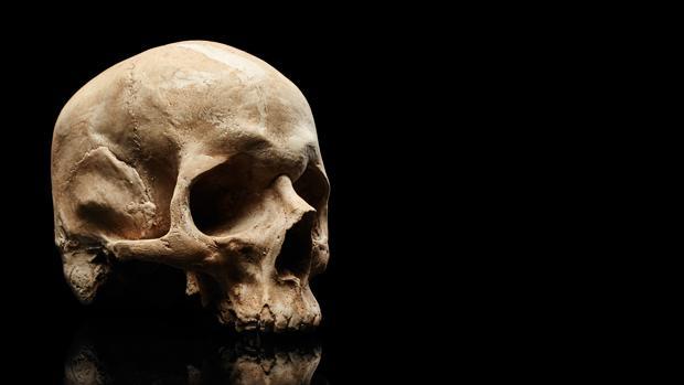 La colección está constituida por 900 cráneos. Morton la usó para establecer diferencias en el tamaño del cerebro entre «razas» humanas