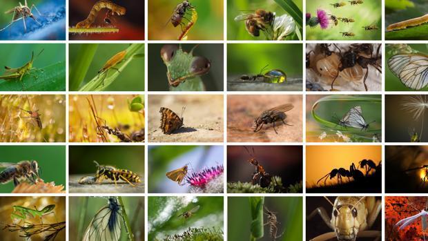 Muchas estudios han dado la alerta por la desaparición de los insectos