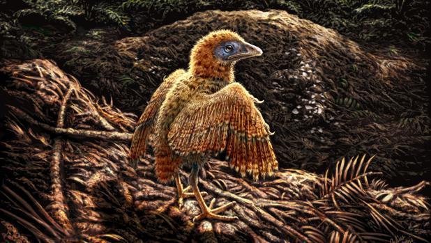 Un polluelo abandona su nido poco después del nacimiento hace unos 125 millones de años. Este pajarito vivía en un ambiente lacustre y puede haber nacido en el suelo como otras aves enantiornitinas extintas.