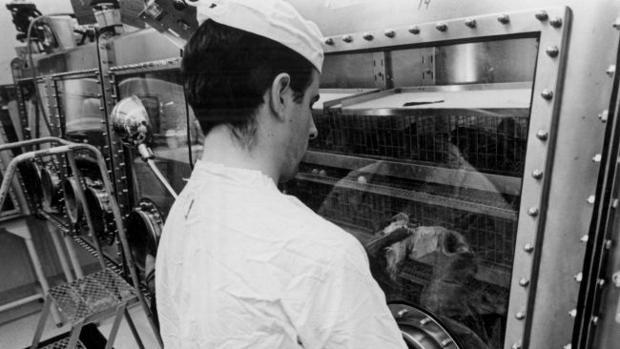 Un técnico de laboratorio estudia una codorniz japonesa expuesta a muestras lunares recolectadas por la misión Apolo 11