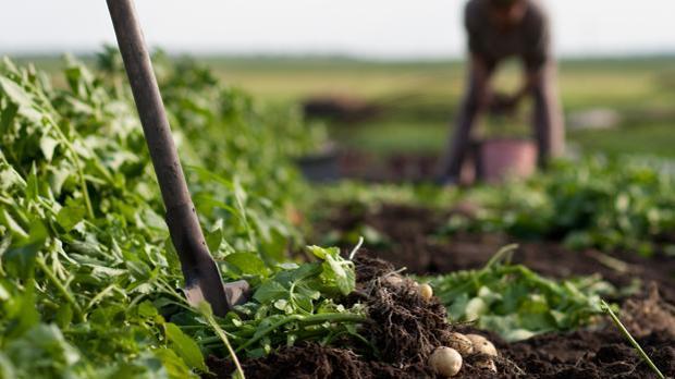 Investigadores han propuesto cambios capaces de alimentar a 10.000 millones de personas de forma sostenible