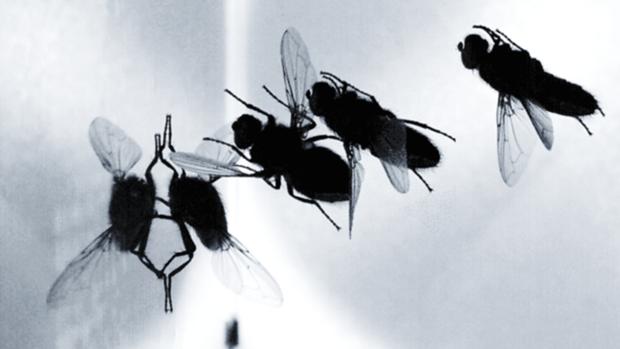 ¿Cuáles son los superpoderes de las moscas?