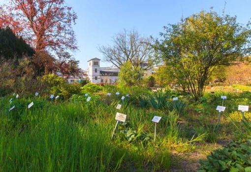 El jardín botánico de la Universidad de Leipzig (Alemania). En un área de solo tres hectáreas, crecen aquí alrededor de 6.500 de las 350.000 especies de plantas de todo el mundo