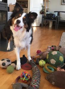 El perro «Whisky», en la casa de sus dueños en Noruega