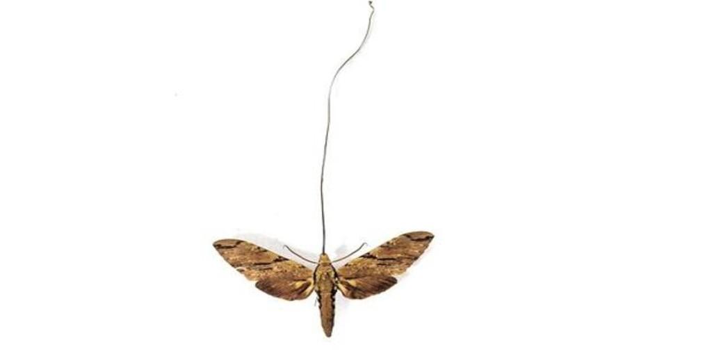 La extraordinaria predicción de Darwin sobre la existencia de una mariposa