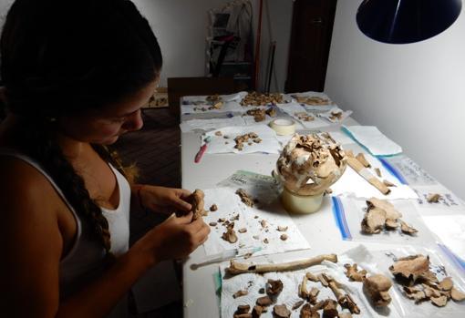 Después de la excavación, en el laboratorio se realiza un trabajo inmenso de medición y análisis. En la imagen la reconstrucción de un cráneo excavado en Panama la Vieja