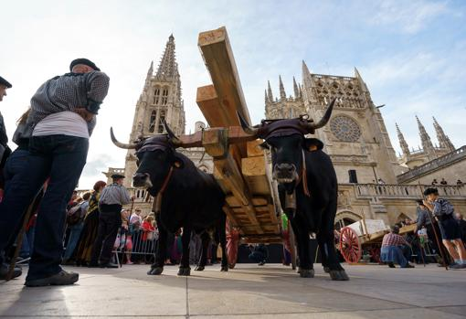 Recreation of the transport of the stones with which the Cathedral was built (with the Cabañas Real de Carreteros)