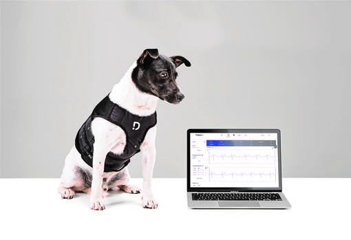 DinbeatUNO, the device that monitors the health of pets