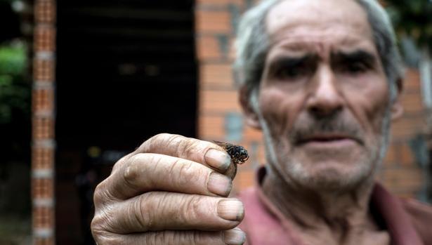 Un hombre muestra a cámara una avispa velutina