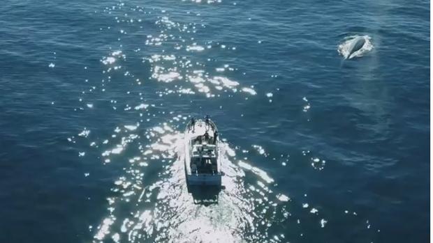 Las imágenes fueron captadas por un dron cerca de la costa