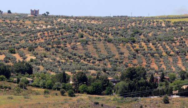 Terrenos donde se asentará el parque temático; al fondo, Guadamur