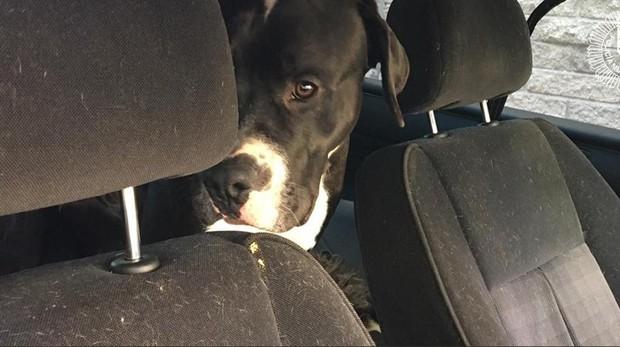 Uno de los perros en el interior del vehículo