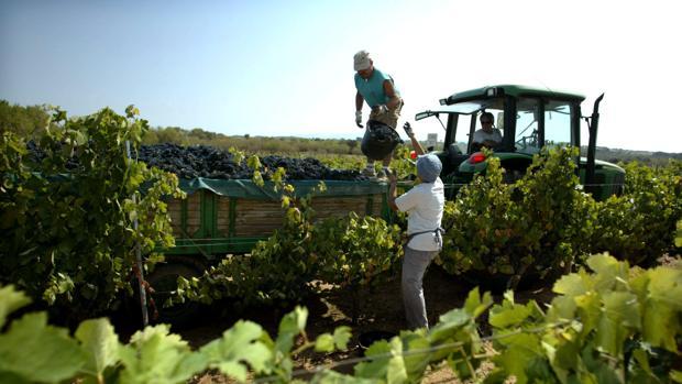 Trabajadores del campo durante una campaña de vendimia