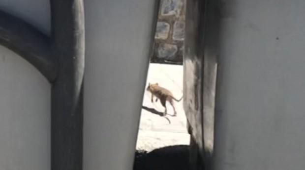 Una de las ratas, escurriéndose entre los contenedores