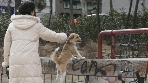 Un perro con su propietaria en un parque