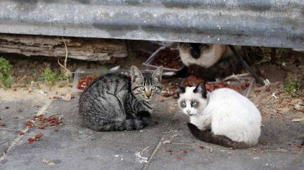 Imagen de unos gatos callejeros en Córdoba