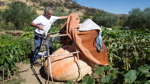 El agricultor de Fermoselle (Zamora) Manuel Ramos, responsable de las calabaceras gigantes