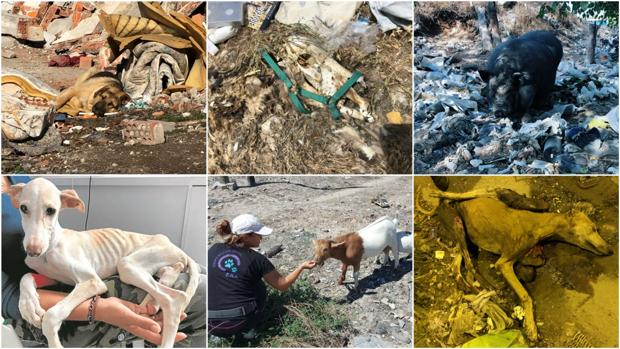 El Comisionado de la Cañada Real crea un protocolo para salvar a los animales