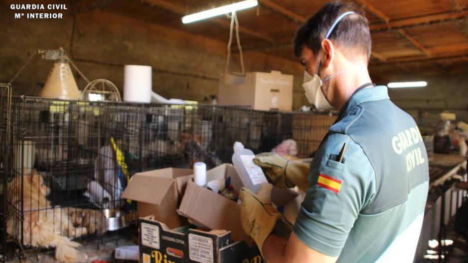La Guardia Civil Rescata 544 Perros Hacinados En Una Nauseabunda Granja De Zaragoza
