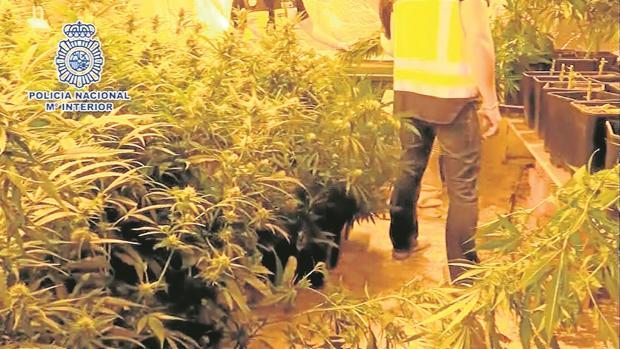 Así cayó la mayor alianza turco-española de tráfico de heroína y marihuana